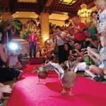 duck n